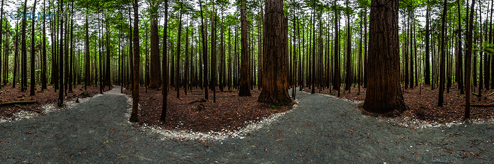 360 Panoramic Photo from the Redwood Memorial Grove Track at Whakarewarewa Forest - Rotorua - New Zealand. © Christian Kleiman Photographer, Author, Editor