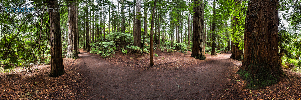 360 Panoramic Photo along Sequoias & Mamakus at the Whakarewarewa Forest - Rotorua - New Zealand. © Christian Kleiman Photographer, Author, Editor