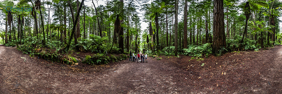 Foto Panorámica 360 de árboles helecho gigantes en Whakarewarewa Forest - Rotorua, Nueva Zelanda. © Christian Kleiman Fotógrafo, Autor y Editor