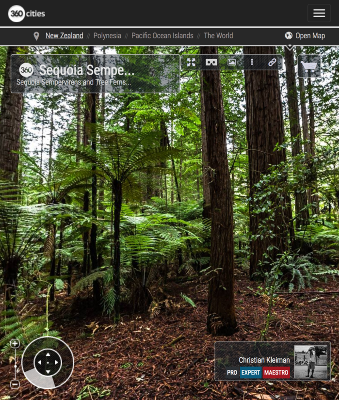 Foto Panorámica 360 de Secuoyas Sempervirens y árboles helecho - Whakarewarewa Forest - Rotorua, Nueva Zelanda. © Christian Kleiman Fotógrafo, Autor, Editor