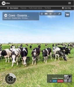 Vacas Pastando en Waimate - Foto Panorámica 360 - © Christian Kleiman Fotógrafo - Ganaderías y Vacas Lecheras en Waimate - South Canterbury - Nueva Zelanda