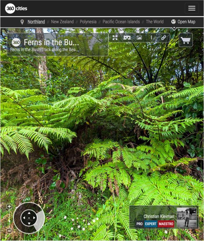 Helechos por el sendero de playa de la Bahía de Hauai - Bay of Islands, Nueva Zelanda - Foto Pano 360 VR