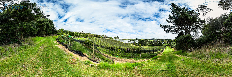 Casita Miro Vineyard - Waiheke Island - Auckland, New Zealand - 360 VR Pano Photo